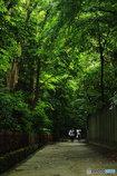 緑葉の誘惑3(鶴ケ丘八幡宮)