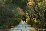 鎌倉Now01(東慶寺)