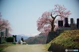 思い出桜5(墓守桜)10年前