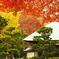 鎌倉Now10(浄妙寺)