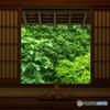 緑葉の誘惑5(喜泉庵 迷いの窓)