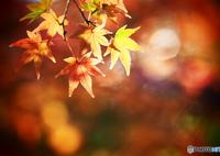 OLYMPUS E-M1で撮影した(ウキウキの季節)の写真(画像)