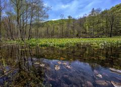 お花畑の湿原