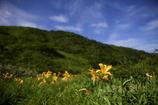 ニッコウキスゲの咲く白木峰