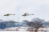 湖北で羽ばたく