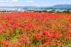 九品寺の赤い絨毯