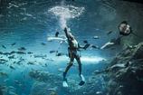 His sea