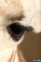ズーラシア キリンの目 優しい目