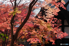 寺院の紅葉