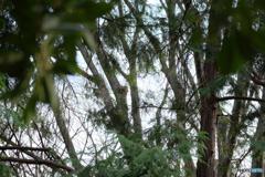 薄曇りの森
