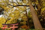大きな銀杏の木の下で