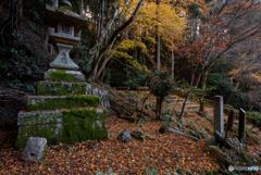 晩秋の日向大神宮