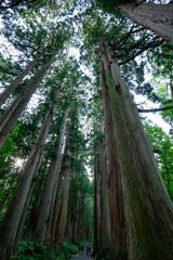神聖なる木々