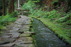 苔生す水路