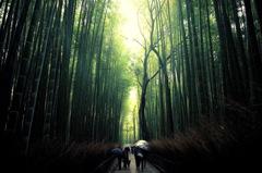 嵐山 竹林にて其の二
