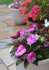 奥さんのお庭  雨花壇
