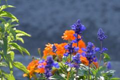 ふらり散歩 町内会の花壇