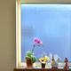 奥さんのお庭 窓飾