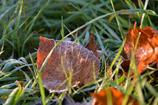 ふらり散歩 Autumn Leaves 9