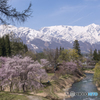 大出公園の春