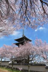 香林寺の春