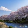 竜巖淵の桜