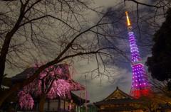 タワーと夜桜