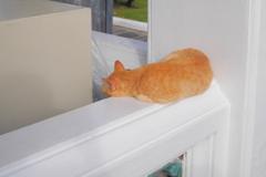 タイの猫さん