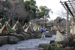 鶴岡八幡宮 ぼたん園