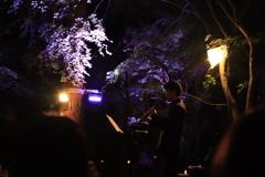 紅葉ライトアップ 芸術の秋 音楽