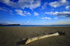 流木のある砂浜の風景
