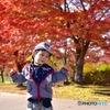 秋 、モミジで大満足