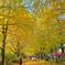 昭和記念公園といえば