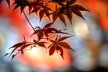 秋色 モミジ2