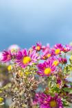 冬の空と花。