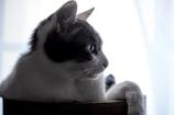 窓辺の素敵王子。