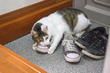靴が好きなの。