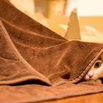 隠れているもふくん。