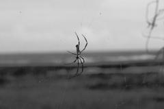 蜘蛛の哀愁