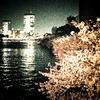 sakura #3