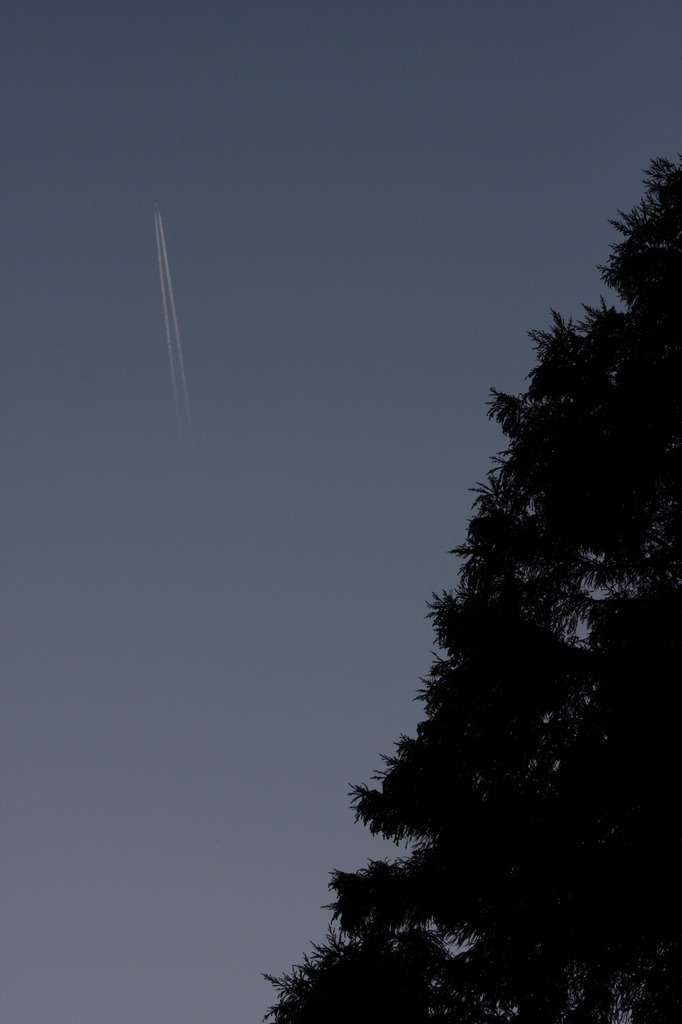 木と飛行機雲