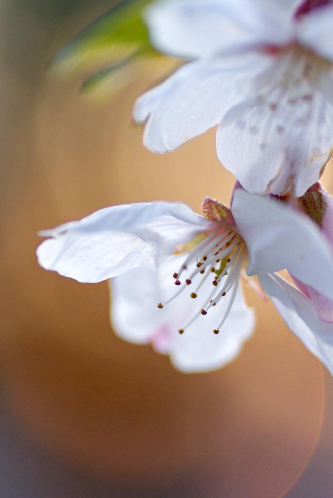 桜と光 2
