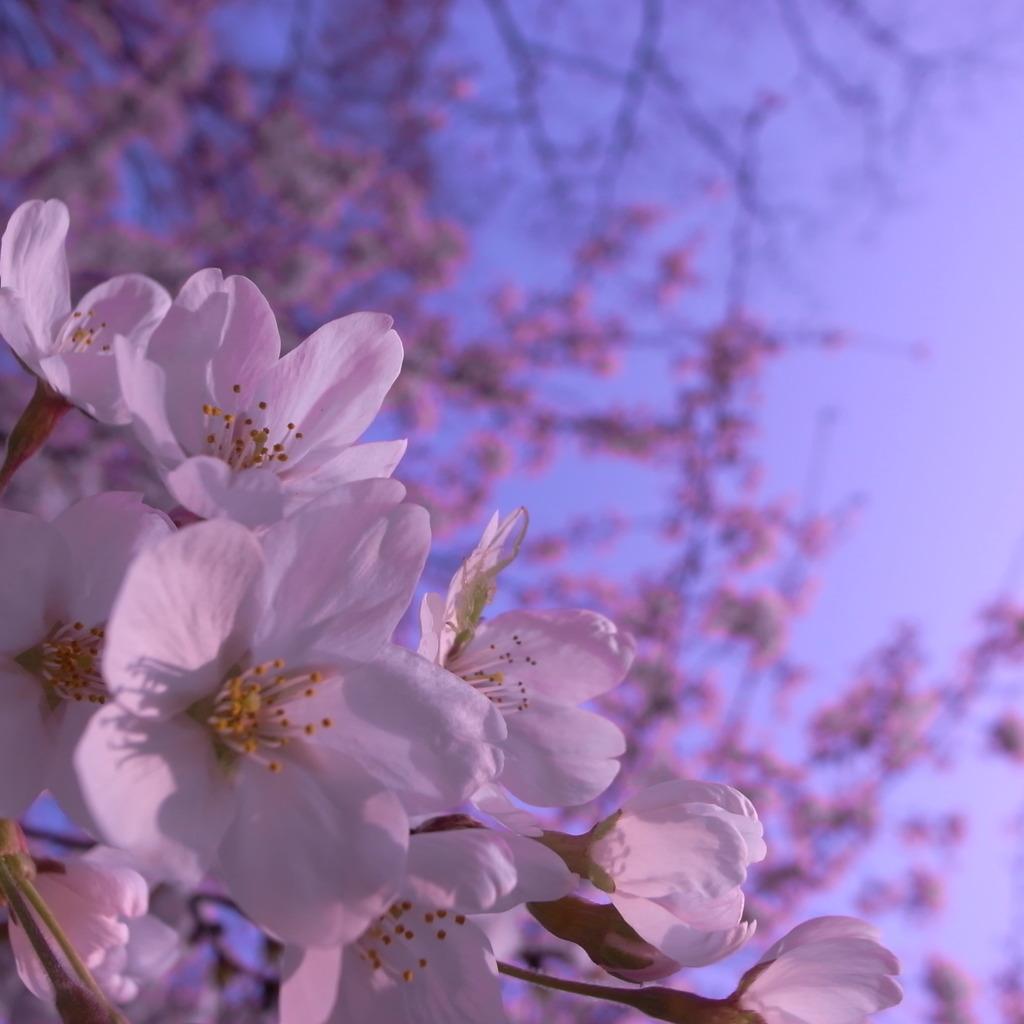 春が来てるって誰かが言ってたよ