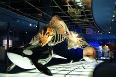 名古屋港水族館 シャチ