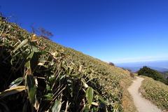 熊笹と山道