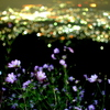 Night & Flower
