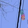 電線にかかる虹