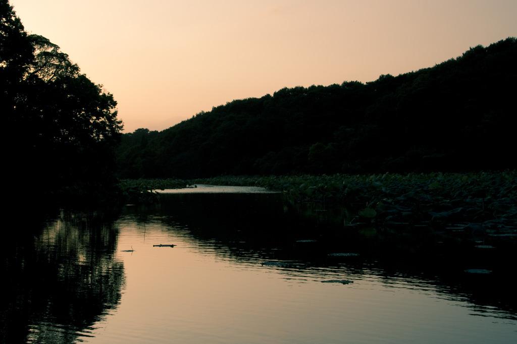 鴨のいる池 坂田ヶ池