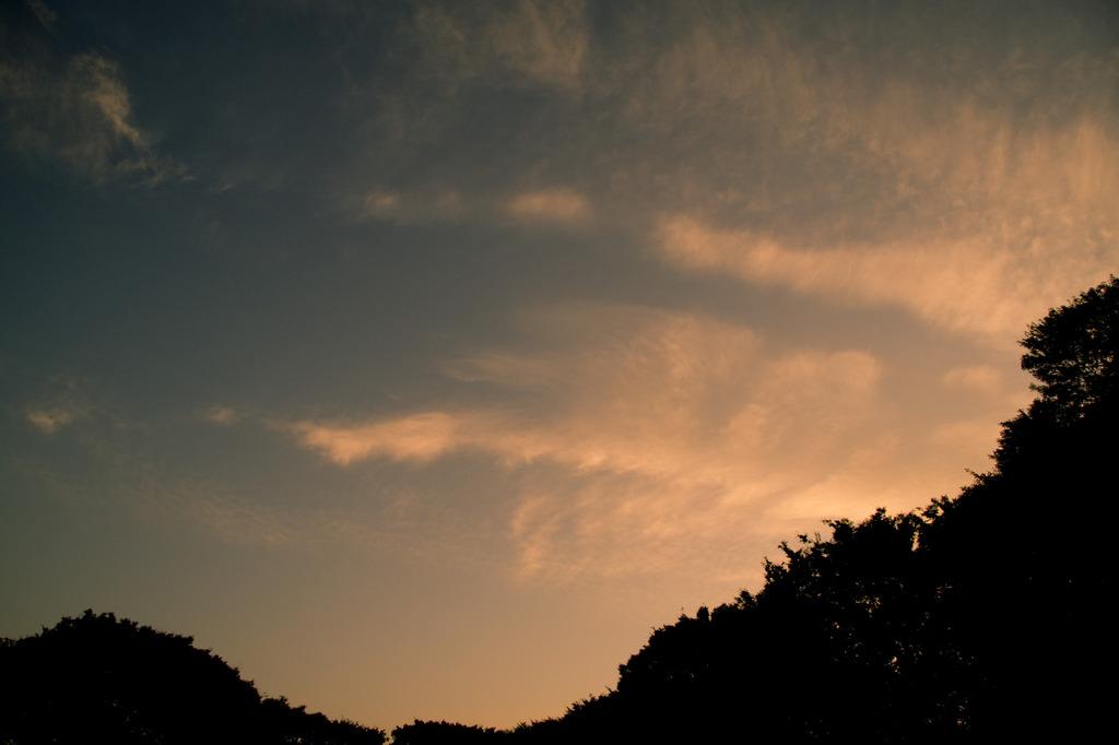 小金井公園の夕暮れ