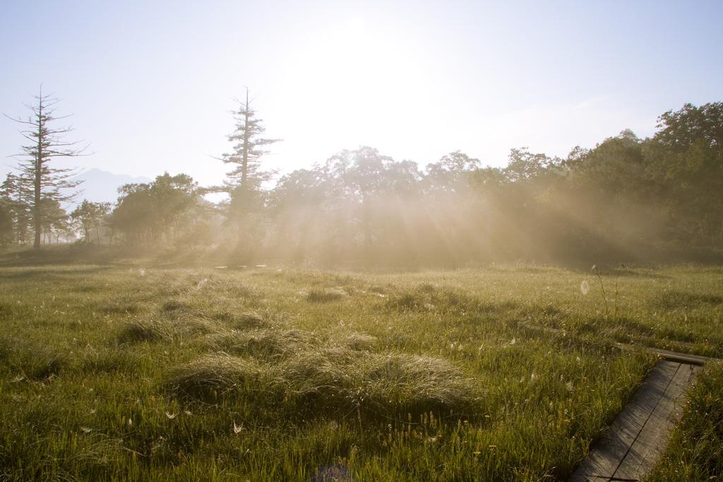 朝霧の逆光